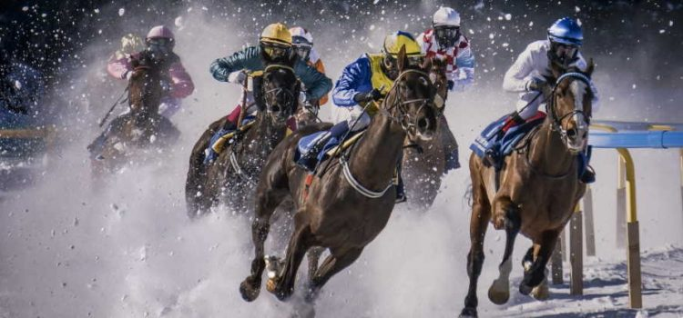 How To Make Bet On Horses In NZ? Easy Guide For Beginners!